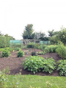 Open Gardens (7)